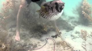 Смотреть онлайн Человек спас запутавшихся в сетях колючих рыб