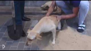 Смотреть онлайн Шокирующее видео: рабочие замуровали собаку, Воронеж