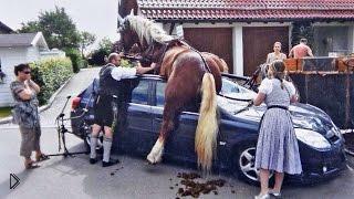 Смотреть онлайн Подборка: Аварии с участием лошадей