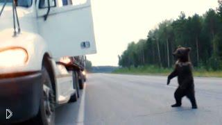 Смотреть онлайн Подборка: Медведи на дороге