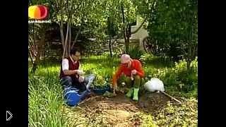 Смотреть онлайн Правила высадки рассады огурцов в грунт