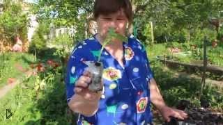 Смотреть онлайн Интересный способ посадить семена огурца