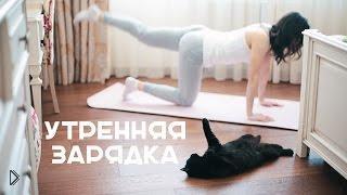 Бодрящая утренняя зарядка, фитнес дома - Видео онлайн