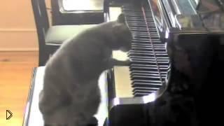 Смотреть онлайн Оркестр играет под музыку кота