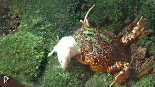 Смотреть онлайн Жаба съела мышку