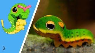Смотреть онлайн Животные и рыбы похожие на покемонов