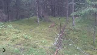 Смотреть онлайн Русский мужик очень сильно тупанул в лесу