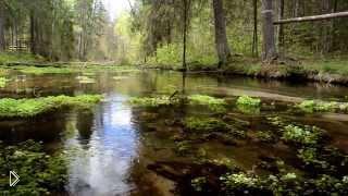 Смотреть онлайн Звуки и атмосфера леса HD без музыки