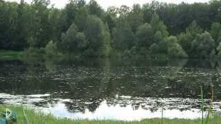 Смотреть онлайн Спокойное видео со звуками утра, лягушек, леса