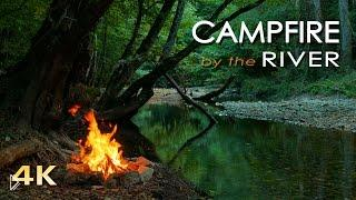 Смотреть онлайн Релакс: Наслаждаемся атмосферой леса 4К HD