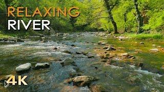 Смотреть онлайн Звуки природы: журчания ручья для релакса