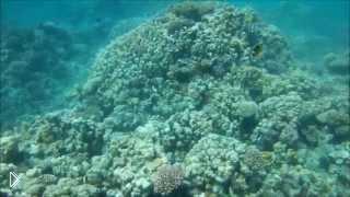 Смотреть онлайн Подводный мир Египта