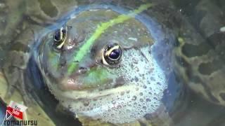 Смотреть онлайн Делаем быструю ловушку для маленьких рыб