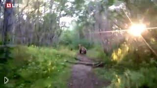 Смотреть онлайн Мужик пытается догнать медведей в лесу