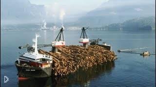 Смотреть онлайн Вот так происходит выгрузка леса с корабля