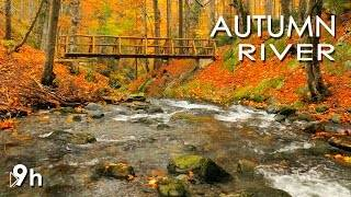 Смотреть онлайн Релакс: Осенний лес с ручьем