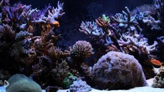 Смотреть онлайн Наблюдаем за рыбками в аквариуме