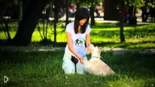 Как научить собаку трюку