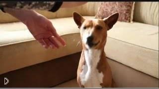 Об адаптации щенка в новом для него доме - Видео онлайн
