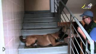 Как научить пса командам сидеть, лежать, стоять - Видео онлайн