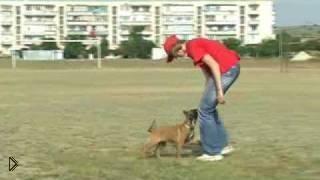 Смотреть онлайн Как научить собаку послушанию