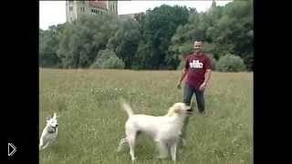 Смотреть онлайн Как научить пса приносить предмет, команда