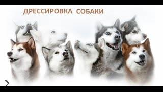 Смотреть онлайн Обучение собаки команде