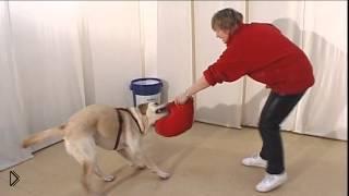 Смотреть онлайн Как научить пса команде