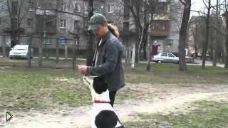 Смотреть онлайн Как дрессировать крупную собаку самостоятельно