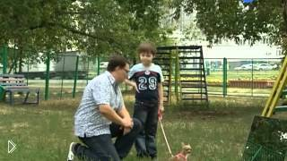 Как помочь щенку чихуахуа не бояться улицы - Видео онлайн