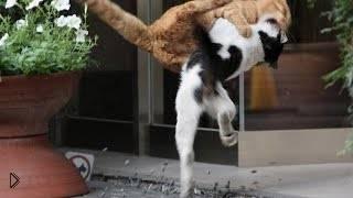 Смотреть онлайн Подборка: Кошки надают на собак
