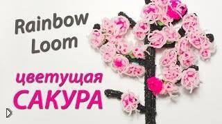 Смотреть онлайн Как сплести цветущую сакуру из резинок