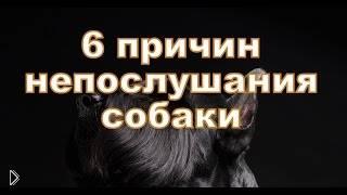 Смотреть онлайн ТОП 6 причин почему Вас не слушается собака