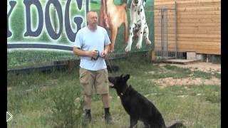 Смотреть онлайн Учим собаку команде