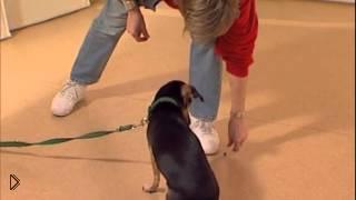 Смотреть онлайн Дрессировка собак: отучаем собаку есть с пола