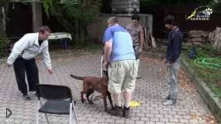 Смотреть онлайн Способы отучить щенка подбегать к незнакомцам
