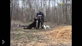 Смотреть онлайн Как отучить собаку проявлять агрессию