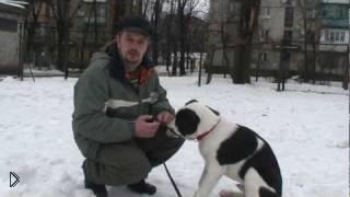 Смотреть онлайн Как приучить собаку к кличке