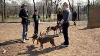 Смотреть онлайн Отучаем пса агрессировать на других собак