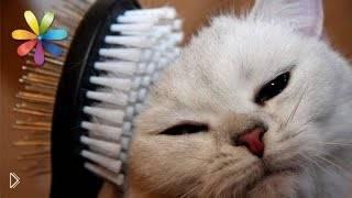 Смотреть онлайн Особенности процесса линьки у кошек