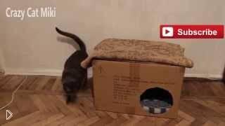 Смотреть онлайн Как сделать домик для кота из картонной коробки