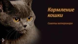 Смотреть онлайн Чем кормить котят, которые остались без мамы
