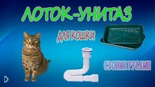Смотреть онлайн Неплохая идея сделать для кошки лоток-унитаз
