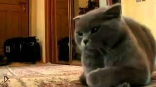 Интересные советы по воспитанию кошек - Видео онлайн