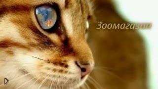 Смотреть онлайн Что необходимо купить для котенка