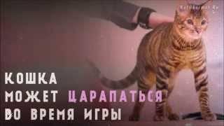 Смотреть онлайн Почему коты могут кусаться и царапаться