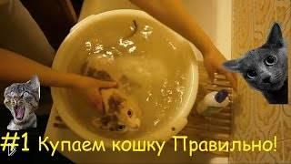 Смотреть онлайн Как купать кошек: порода Сфинкс