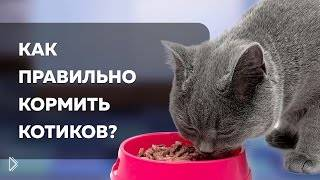 Смотреть онлайн Чем можно кормить котов