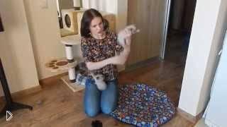 Как кормить грудного котенка смесью - Видео онлайн