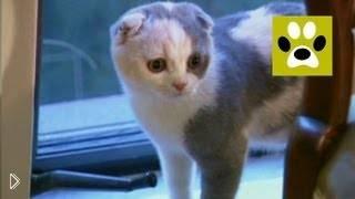 Смотреть онлайн Что нужно учесть при заведении котенка